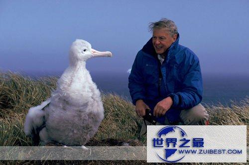 【图】世界上最大的飞鸟