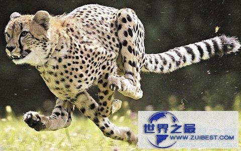 【图】世界上最快的动物
