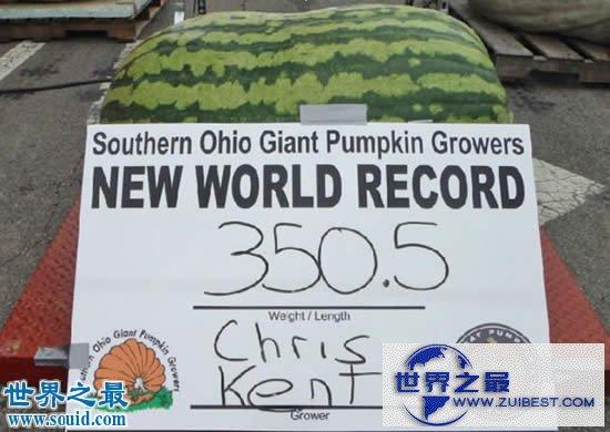 【图】世界上最大的西瓜,重达300斤(比人还高)