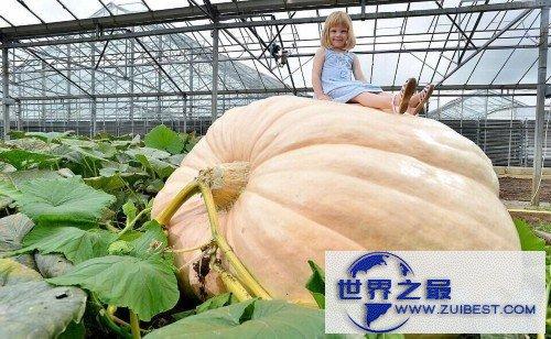 【图】世界上最大最重的南瓜,重1900斤(如汽车一般大