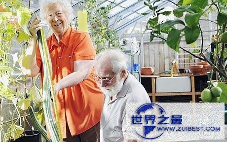 【图】世界上最长的黄瓜,英国老太种出长1.19米黄瓜