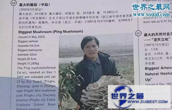 【图】世界上最大的平菇,嘉兴平湖巨型平菇(54.5cm)