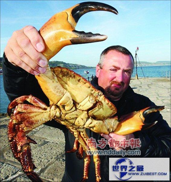 【图】世界上最大的食用蟹