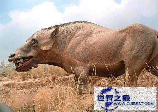 【图】世界上最大的猪,关于猪的世界之最