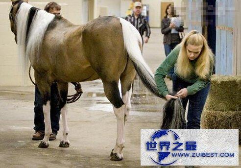 【图】世界上尾巴最长的马,长达3.81米
