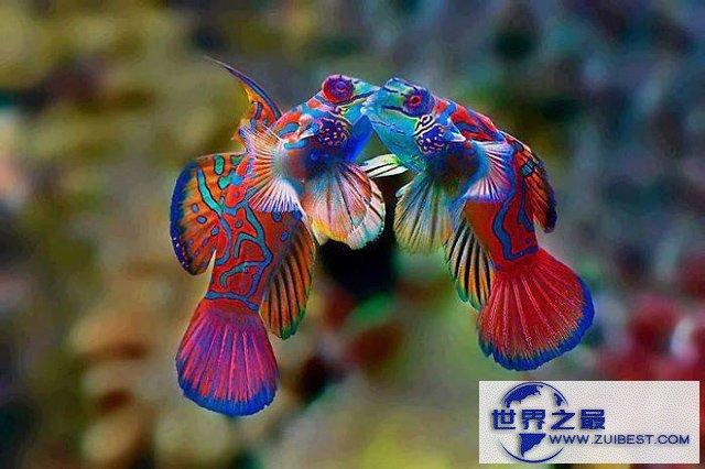 【图】地球上颜色最诡异的动物大全,你绝对没见过(图