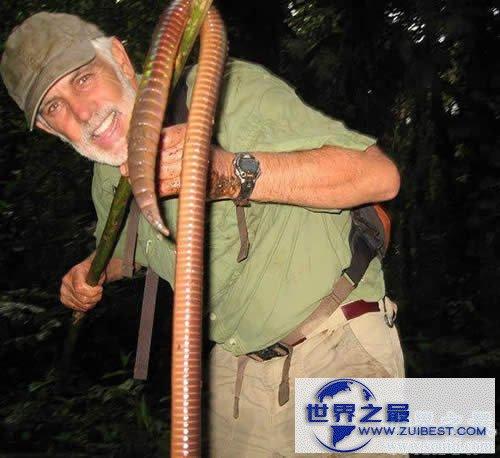 【图】世界上最大的蚯蚓,澳大利亚巨型蚯蚓长达3米