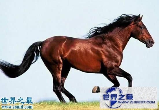 【图】关于马匹的10个世界之最,史上最全纪录
