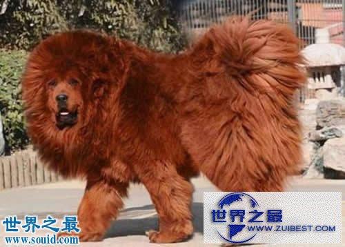 【图】世界上最贵的10个动物,绿猴赛马价值1600万美元