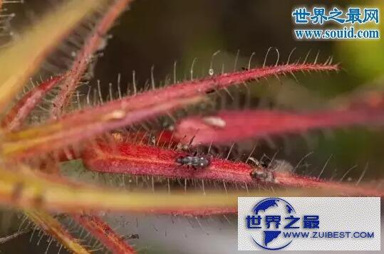 【图】世界十大危险植物,坏女人花会渗出腐蚀性液体