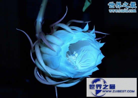 【图】世界上最美的花,盘点十大最美丽的花