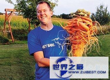 【图】盘点世界之最蔬菜,世界最重胡萝卜20.34斤已成精