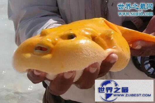 【图】世界十大怪异的海洋生物,海猪(水乎乎的多脚生