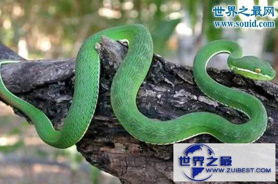 【图】世界十大名蛇,变色蛇(超强的隐身术)