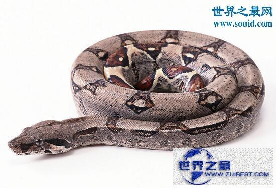 【图】最长寿的蛇绿茸线蛇,已活1867岁(能活20万年)