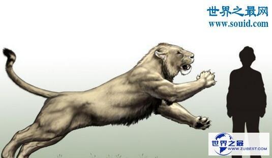 【图】史上最大的猫科动物,残暴狮(长3.5米/重380千克