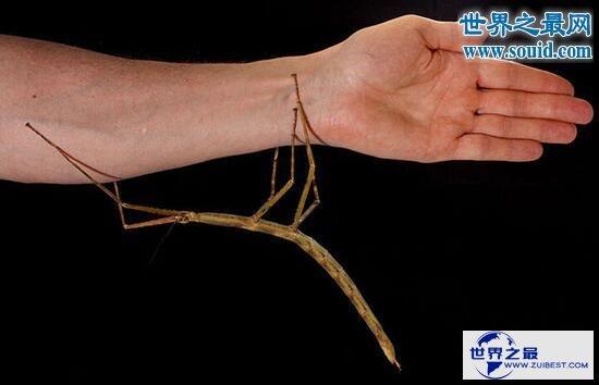 【图】十大最有趣的新物种,树枝会走路/蜘蛛会打滚