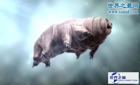 【图】生命力最强的动物缓步动物,甚至可以长生不死