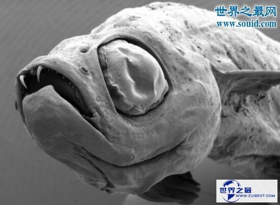 【图】世界上最奇怪的生物,你没见过的异形怪物