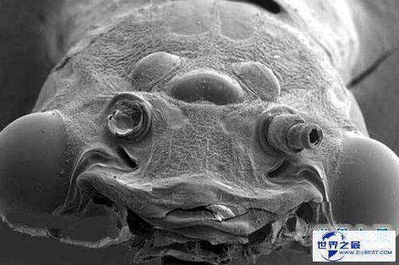 【图】世界十大丑陋动物,水滴鱼丑成一坨(被自己丑哭
