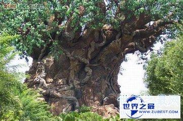 【图】参天大树的构成可不是久而久之的事 世界上最高