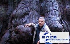 【图】世界上最高的树 有156米高的树