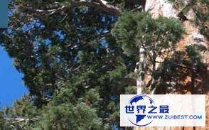 """""""亥伯龙神""""115.61米"""