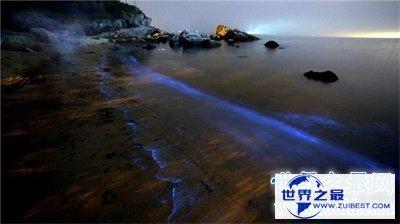 【图】荧光海滩真是又浪漫又神奇 竟然是这么构成的