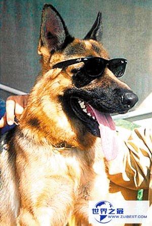 【图】世界上最贵的狗排名,中国纯红藏獒高达1000万