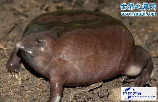 【图】生物界十大活化石,鹦鹉螺5亿年前中止了退化