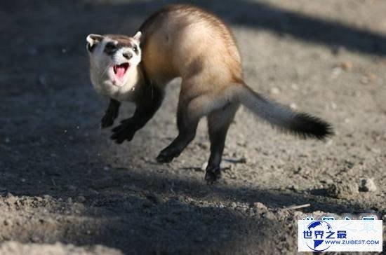 【图】动物界十大最变态的杀手,交配中吃掉另一半