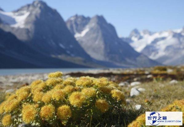 世界上最大的岛屿 可能包容四个法国的绿色土地