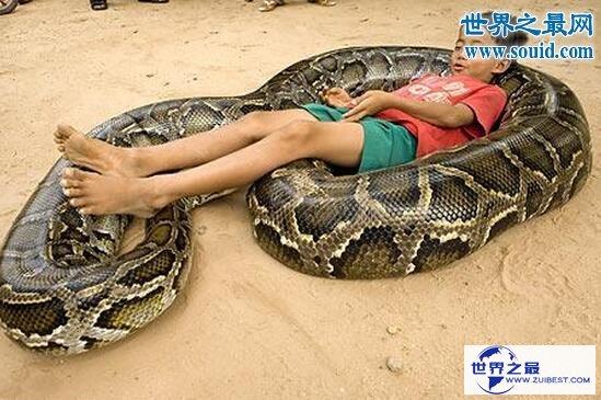 【图】关于蛇的10个世界之最,最毒的蛇一口咬死100人