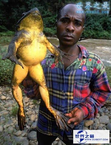 【图】世界上最大的龙虾,长1.2米重40斤的大龙虾(图片