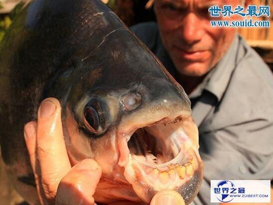 【图】关于鱼的十个世界之最,最贵的血红龙鱼值500万