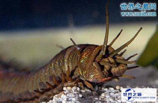 【图】关于虫子的8个世界之最,最大的甲虫比手掌还大
