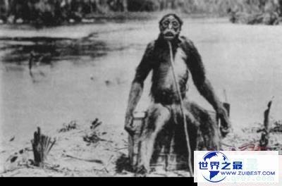 二战四大未解之谜:所罗门群岛伟人、武吉知马猿人、蜘蛛巨蟹、厉害海怪