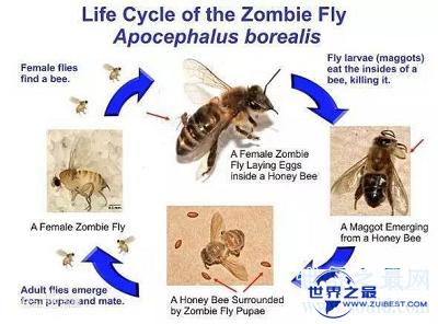 """【图】动物界最恐惧僵尸现象——如行尸走肉的""""僵尸"""
