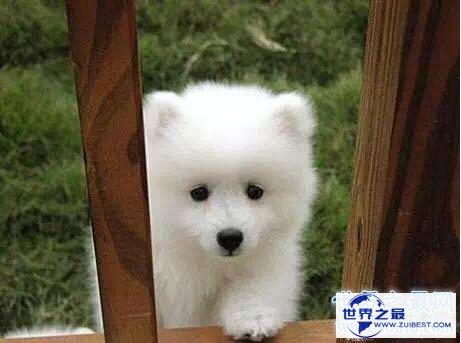【图】宠物狗品种最受欢迎前十,你家小可恶上榜了吗