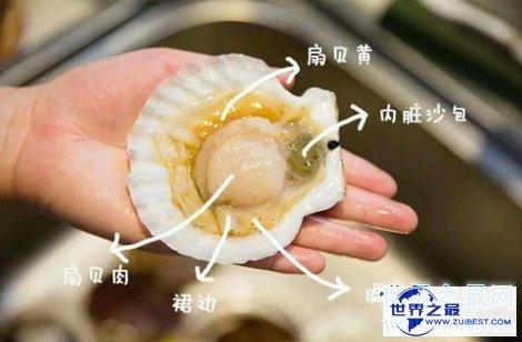 【图】扇贝的做法教会你如何做出好吃美味的扇贝哦