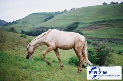【图】属马的几月出生最好,关于生肖的说法
