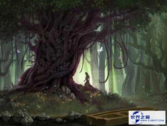 雅鲁藏布大峡谷悬疑二:杀人树的传闻