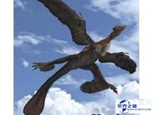 【图】不同于一般鸟类长着两对翅膀的四翼鸟