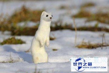 【图】世界上的动物有很多 然而灭绝动物也灭绝了不少