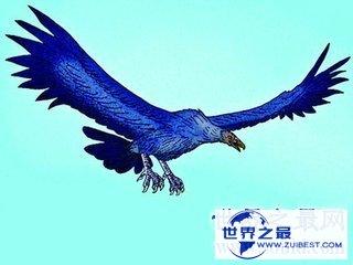 【图】哈斯特鹰是世界上最大的食肉动物之一 目前已经