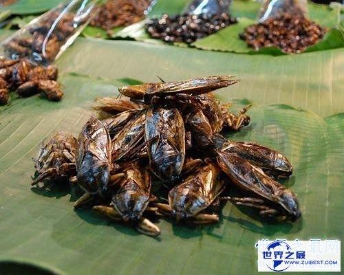 【图】田鳖可能食用吗 原来它生存在浅水是由于这个
