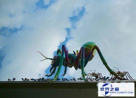【图】你见过那些十分有力量的蚂蚁之巨型蚂蚁