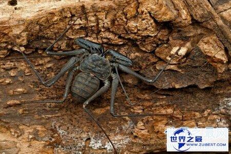 【图】泰坦甲虫的个头十分大 看起来十分的可怕