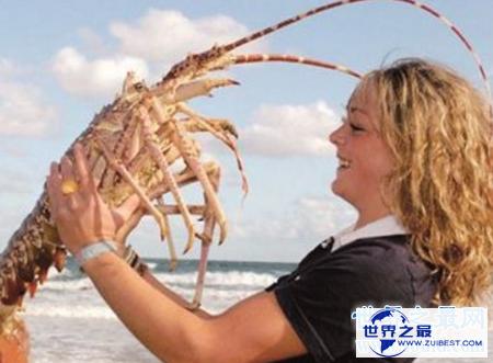 【图】大龙虾图片你能分辨出几种不同的龙虾