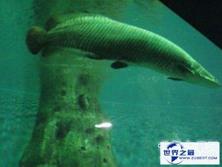 【图】奥秘的喀纳斯湖水怪与哲罗鲑有什么关系